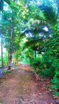 The Serene Walk Path