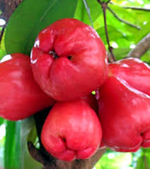 Rose Apples