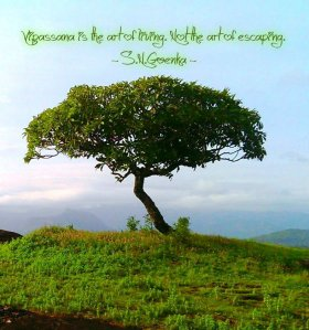 Vipassana_Quote